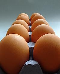 Dozen_eggs