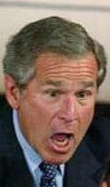 Angry_bush_1