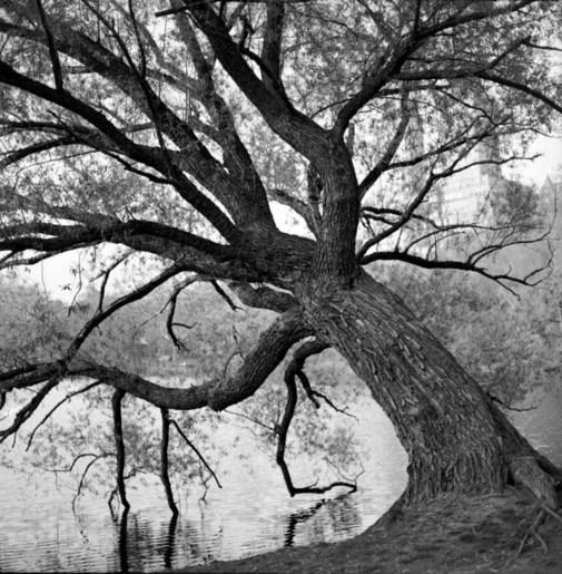 Tree_lab_3